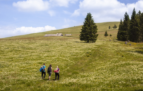 Hiking at Feldberg